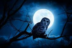 """It was the owl that shrieked"" AN owl is a symbol for wisdom or death in this case however death fits the scenario."