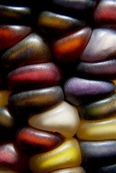 The close-up beauty of autumn color caught in the kernels of seasonal corn, Northern Wisconsin, photography by Jeff Rennicke.
