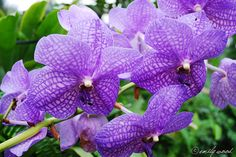 La question que tout le monde se pose certainement, que faut-il faire pour bien entretenir une orchidée ? Ici vous trouverez tout ce qu'il y a savoir pour l'entretien quotidien de votre fleur préférée. Crédit :Emily L'instant culture Avant de débuter, il est bon de rappeler quelques