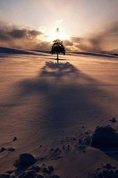 heaven-ly-mind: Christmas Tree! by Kent Shiraishi on 500px...