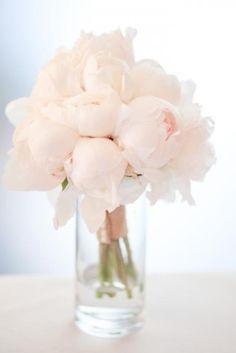 White peyonies
