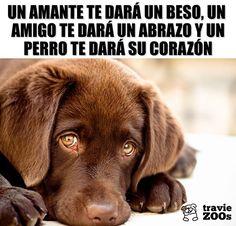 Leggi l'articolo per saperne di più 🐶 Labrador Retrievers, Retriever Dog, Mundo Animal, My Animal, Chesapeake Bay Retriever, I Love Dogs, Cute Dogs, Dog Muzzle, Best Dog Training