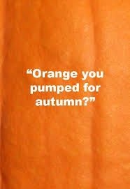 The Funniest Pumpkin Quotes and Puns to Use on Instagram Pumpkin Puns, Pumpkin Quotes, You Don't Know Jack, How To Know, It's The Great Pumpkin, Creative Pumpkins, Funny Pumpkins, Fun Fall Activities, Pumpkin Picking