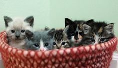 An adorable basket of kittens…