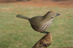 Ovenbird 50littlebirds.com
