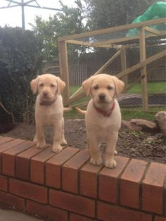 Love Labradors? View Our Facebook Page https://www.facebook.com/pages/Dont-Hurt-Me-Im-Your-Best-Friend/636479679717238 & Join Over 9,000 Other Dog Lovers