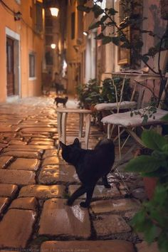 Black cats on a cobbled European street.
