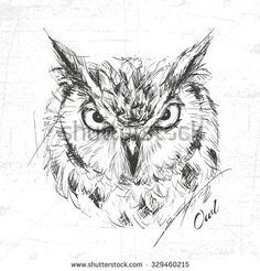 Owl sketch drawn hands, vector illustration