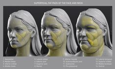 Uldis Zarins is raising funds for Form of The Head and Neck - by Anatomy For Sculptors on Kickstarter! Form of The Head and Neck. This is human anatomy for artists. Making Anatomy Visual And Understandable! Facial Anatomy, Head Anatomy, Body Anatomy, Anatomy Of The Face, Anatomy Organs, Anatomy Sketches, Anatomy Drawing, Anatomy Art, Anatomy Reference