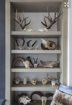Interior designer Joy Rondello created special spaces for the entire family, including Steven Rinella's animal skulls and hides. Taxidermy Decor, Taxidermy Display, Hunting Home Decor, Deer Head Decor, Trophy Rooms, Up House, Magnolia Homes, Cottage Design, Seattle Times