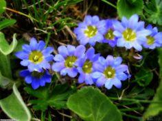 Small Blue Flowers Wallpaper Open Walls In