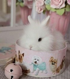 This is adorable! Bunny in a bowl