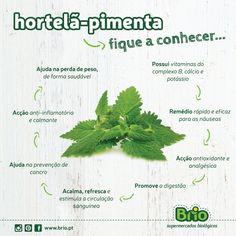 Beneficios da hortelã