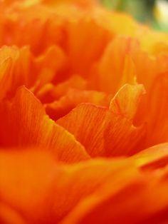 brilliant orange