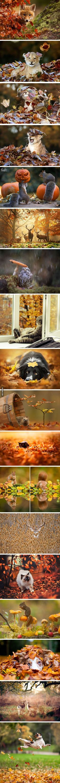 16 Animals Enjoying The Magic Of Autumn