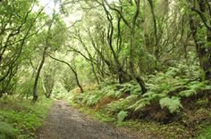 Parque Nacional Garajonay. La Gomera, Islas Canarias. España.