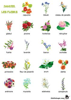 Imagier à imprimer, les fleurs (2)