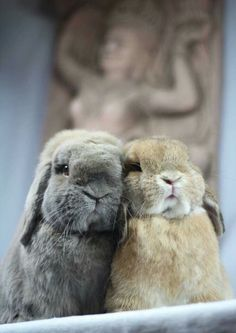 Oooh cute bunnies aw- what's that in the background? ?