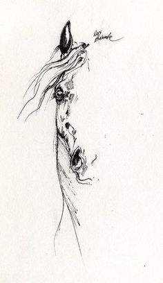 Horse Drawing - Horse Head Study 2014 05 16 by Angel Tarantella