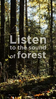 Meditate to the Sound of Forest - The Mindfulness App Free Guided Meditation, Meditation Videos, Easy Meditation, Meditation Sounds, Meditation Quotes, Spiritual Enlightenment, Spiritual Path, Spiritual Awakening, Spirituality