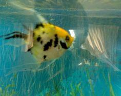 Owned a Huge Aquarium, it was 55 Gal. Had lots of cool Fresh Water fish & one huge Blue Crawdad. ;)