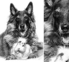 Tervueren pet portraits in pencil
