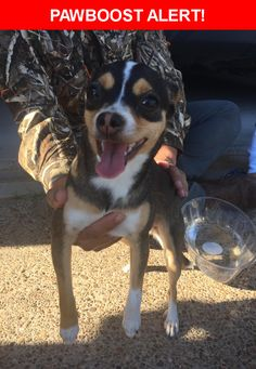 Is this your lost pet? Found in Laredo, TX 78045. Please spread the word so we can find the owner!    Nearest Address: Near Cornell Dr & Shiloh Dr