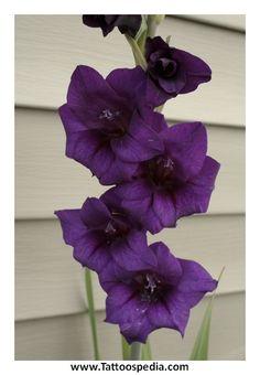 Flower Tattoos Gladiolus 3 - Tattoospedia