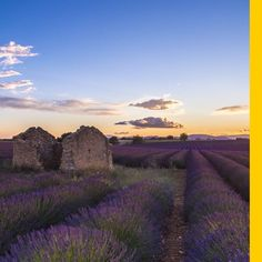While these views of Provence are delightful, you'll have to use your imagination for the inviting fragrance of the vast lavender fields currently in full bloom. #flights & #hotels #Cruises #RentalCars #mexico #lajolla #nyc #sandiego #sky #clouds #beach #food #nature #sunset #night #love #harmonyoftheseas #funny #amazing #awesome #yum #cute #luxury #running #hiking #flying