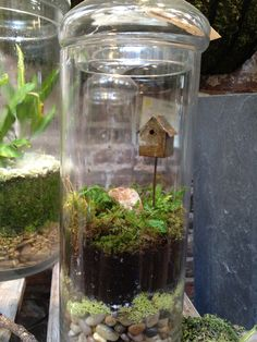 terrarium containers ideas with stylish small bird house looker Terrarium Containers, Air Plant Terrarium, Terrarium Diy, Glass Containers, Interior Design And Remodeling, Home Interior Design, Unique Plants, Tiny World, Craft Club