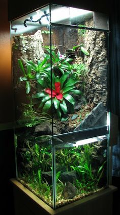 75g Vert Planted Paludarium Journal--this would be awesome for arboreal constrictors or monitors, or even Poison Dart Frogs