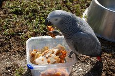 The 6 Components Of A Healthy Parrot Diet