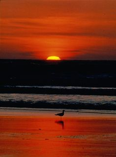 Beautiful sunsets in Orange Beach.  Come see for yourself.  http://toesinthesands.com/