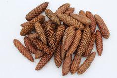 SPRUCE FIR CONES. Natural decor big cones by NaturalWoodlandCraft