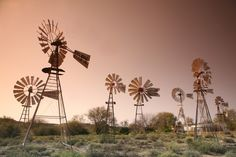 Water (borehole) windmills in the Karoo (a semi-desert) in the Cape Province, South Africa. Wind Chimes, Wind Turbine, Tilting At Windmills, Farm Life, South Africa, Dandelion, Waiting, Deserts, Wind Mills