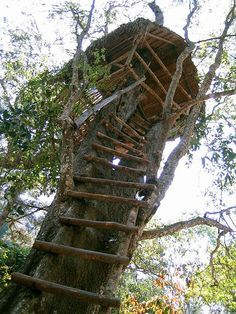 How To Build A Treehouse ? This Tree House Design Ideas For Adult and Kids, Simple and easy. can also be used as a place (to live in), Amazing Tiny treehouse kids, Architecture Modern Luxury treehouse interior cozy Backyard Small treehouse masters Disney Films, Larry Johnson, Tree Hut, Cool Tree Houses, Tree House Designs, House On A Hill, Life Is Strange, Green Life, In The Tree