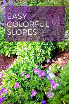Landscape slopes with colorful plants, especially those that bloom most of the summer. Many of these are drought tolerant, which is so helpful for the success of planting slopes. The plant in the front here is Geranium 'Johnson's Blue' which flowers almost all season.