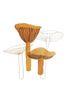 mushroom, Nanna Prieler, painting, layers, illustration, drawing champignons, pilze, mushrooms, schoen
