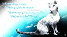 Wonderful Silverstream is in Starclan/Heaven and was mates with Graystripe.She died giving birth to her kits or kittens. Warrior Cats Quotes, Warrior Cats Series, Warrior Cats Books, Cat Quotes, Stupid Cat, Cat Anatomy, Love Warriors, Cat Pose, Russian Blue