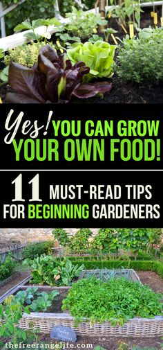 Gardening For Beginners! If you are new to vegetable gardening read these 11 tips for beginners and grow the best backyard garden