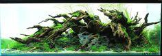 Aquascape by Hoai Nam Vu from #Vietnam . Final tank RANKED 36 on IAPLC 2015.. Shared by Hoai Nam Vu on facebook . Pin by Aqua Poolkoh #IAPLC2015