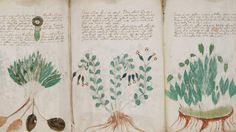 018--1-the-voynich-manuscript-261333