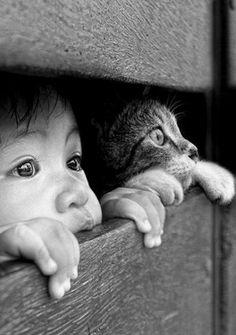 Le regard d'un chat et d'un enfant
