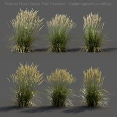 Wind Animation Feather Reed Grass 3d Model Gamma 2 2 Foliage