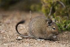 В Абаканском зоопарке поселились необычные грызуны - http://zoovestnik.ru/2015/07/17990/