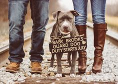 Pregnancy announcement. Pregnancy announcement with dog. Pitbull. Maternity photos.