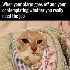 #alarm #catsofig #catlover #catsofinsta #think #job #sleep #wakeup #morning #catsoninstagram