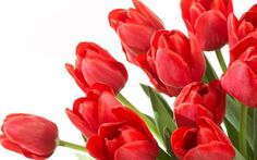 My favorite- Tulips