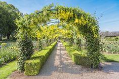Au milieu du jardin, un tunnel recouvert de Laburnum mène à l'orangeraie au design inspiré par  le style du XIX siècle Mai, Vineyard, Sidewalk, Country Roads, Outdoor, Design, Style, Gardens, Rose Bush