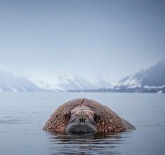 Siberia, National Geographic, Wild Nature, Human Settlement, Iceland, Hunters, Vikings, Naturaleza, Animales